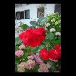 objects/1473/43304_08-Garden.jpg